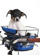 Bike Dog Azul